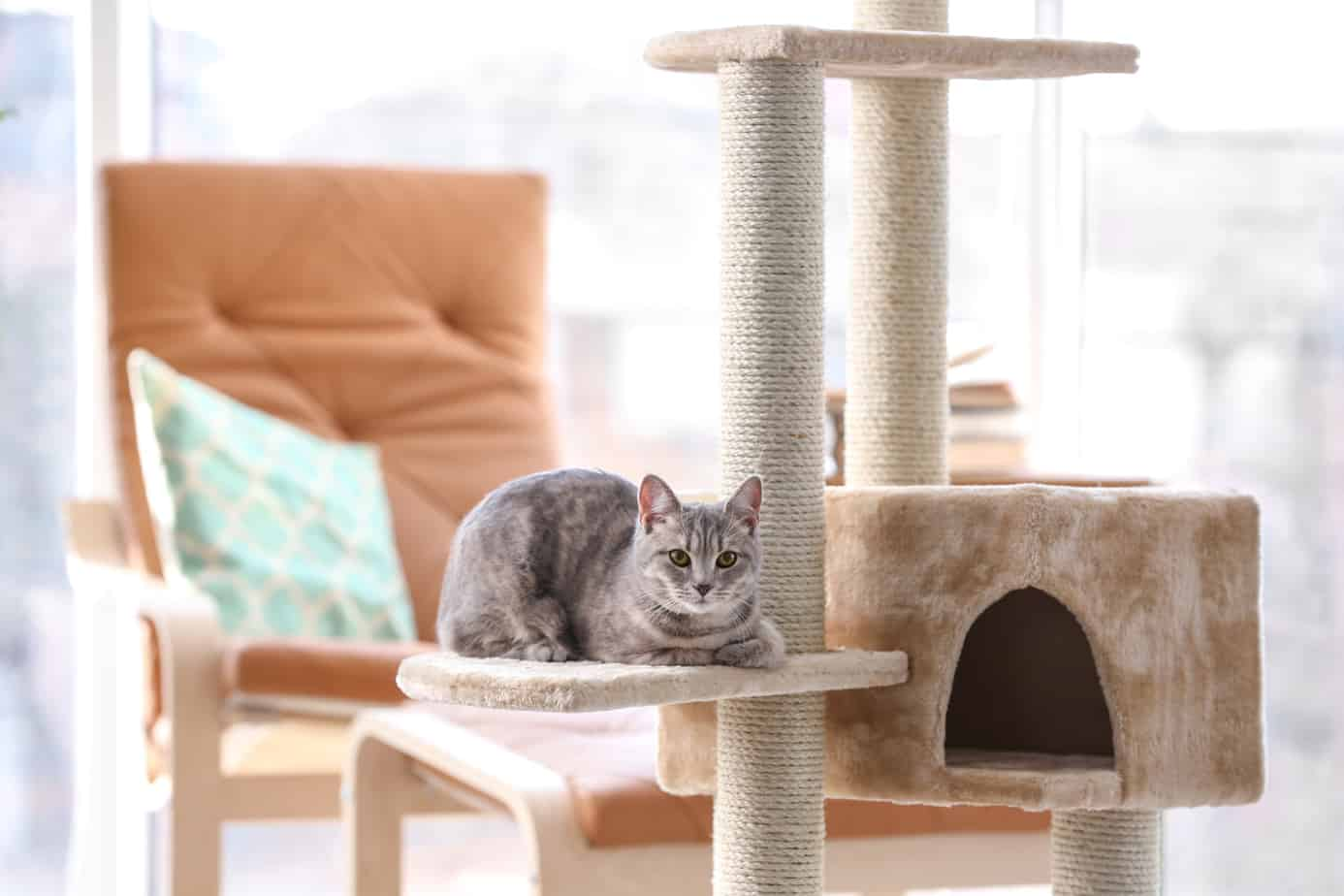 category furniture me towers with you center en shop tree and trees petcostore posts scratchers level scratching cat petco hammock