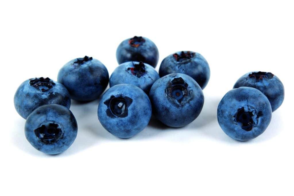 cat eating blueberries 2021